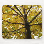 Pair of Yellow Maple Trees Autumn Nature Mouse Pad