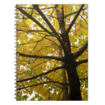Pair of Yellow Maple Trees Autumn Nature Spiral Notebook