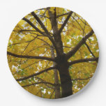 Pair of Yellow Maple Trees Paper Plate