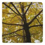 Pair of Yellow Maple Trees Trivet