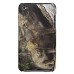 Pair Of Young Coyote Pups Howling Barely There iPod Case