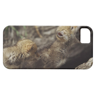 Pair Of Young Coyote Pups Howling iPhone SE/5/5s Case