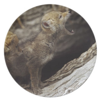 Pair Of Young Coyote Pups Howling Melamine Plate
