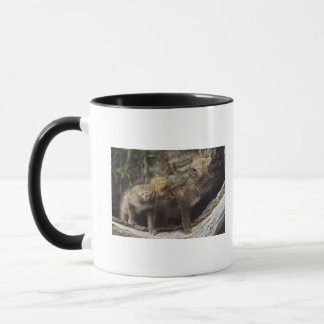 Pair Of Young Coyote Pups Howling Mug