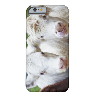 Pair of young white cows at feeding trailor barely there iPhone 6 case
