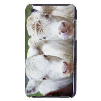 Pair of young white cows at feeding trailor iPod touch case
