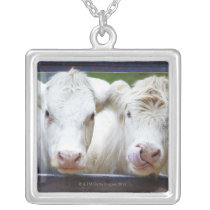 Pair of young white cows at feeding trailor silver plated necklace
