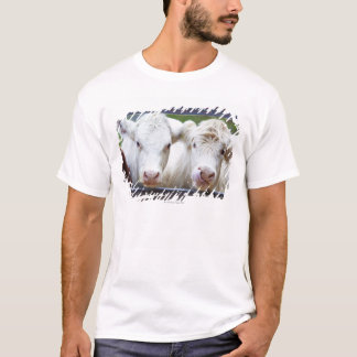 Pair of young white cows at feeding trailor T-Shirt