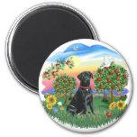 País brillante - Labrador negro Imán