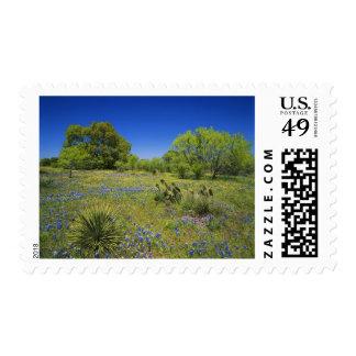 País de la colina de Tejas, Tejas, bladderpod Timbre Postal