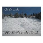 País de las maravillas del invierno de Colorado Tarjeta Postal
