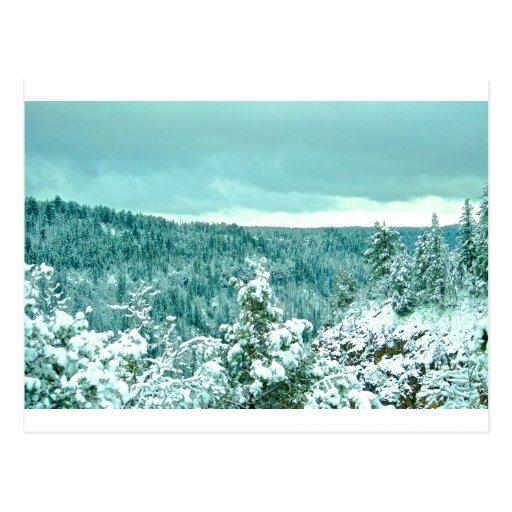 País de las maravillas del invierno del bosque de tarjeta postal