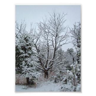País de las maravillas del invierno impresiones fotográficas
