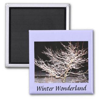 País de las maravillas del invierno imán cuadrado