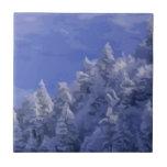País de las maravillas del invierno teja