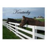 País del Bluegrass de Kentucky Tarjetas Postales