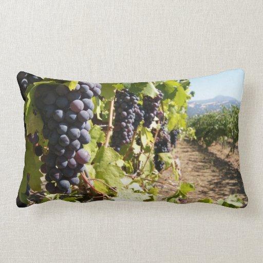 País vinícola de California Cojin