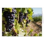 País vinícola de California Tarjeton