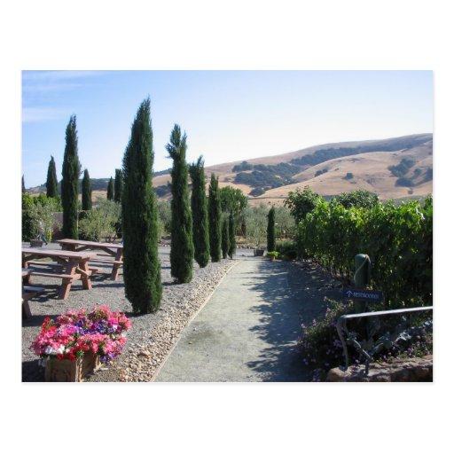 País vinícola tarjetas postales