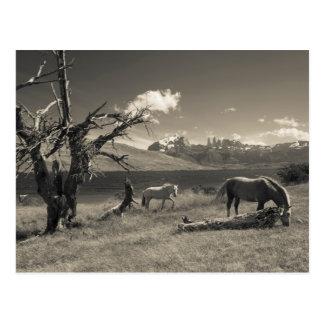 Paisaje con los caballos postal