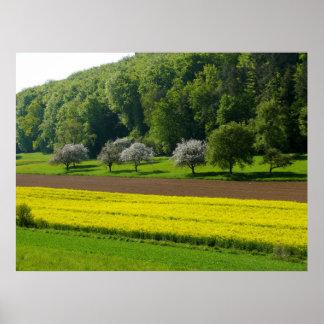 Paisaje de campo en la primavera con campo de colz