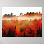 Paisaje de la escena de los árboles del Adirondack Impresiones