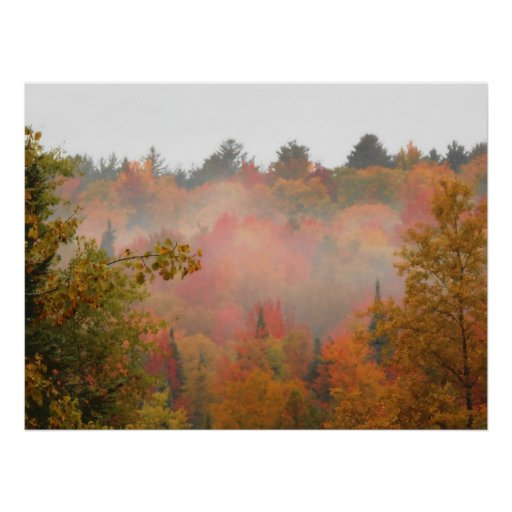 Paisaje de la escena de los árboles del Adirondack Posters