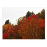 Paisaje de la escena de los árboles del Adirondack Tarjetas Postales