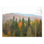 Paisaje de la escena de los árboles del Adirondack Postal