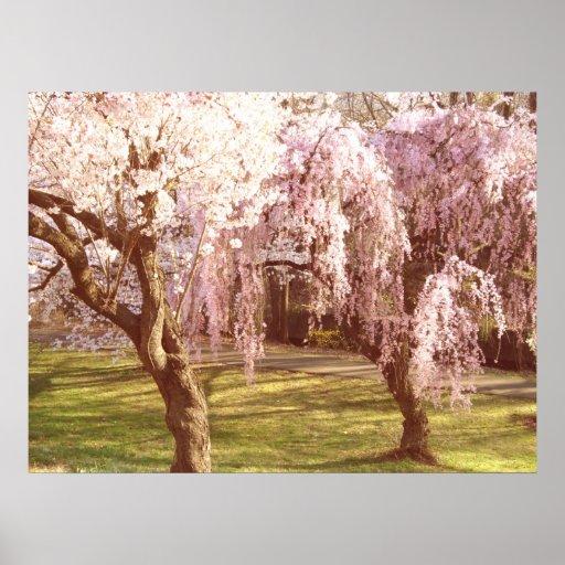 Paisaje de la flor de cerezo impresiones