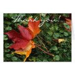 ¡Paisaje de las hojas - gracias! Felicitaciones