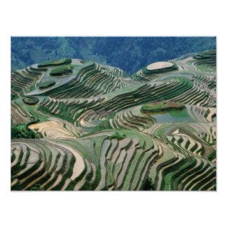 Paisaje de las terrazas del arroz en la montaña, fotografía