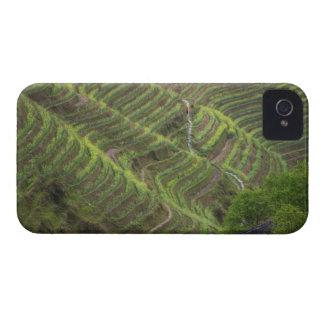 Paisaje de las terrazas del arroz en la montaña, iPhone 4 Case-Mate protector