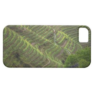 Paisaje de las terrazas del arroz en la montaña, iPhone 5 Case-Mate funda