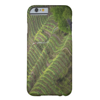 Paisaje de las terrazas del arroz en la montaña, funda de iPhone 6 barely there