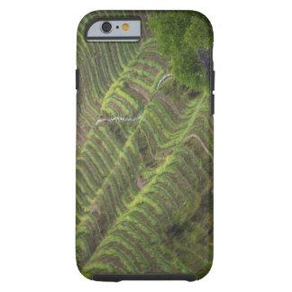 Paisaje de las terrazas del arroz en la montaña, funda de iPhone 6 tough