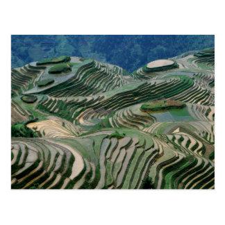 Paisaje de las terrazas del arroz en la montaña postales