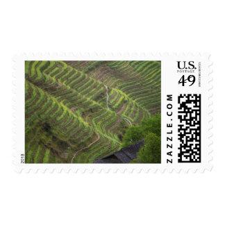Paisaje de las terrazas del arroz en la montaña, timbre postal