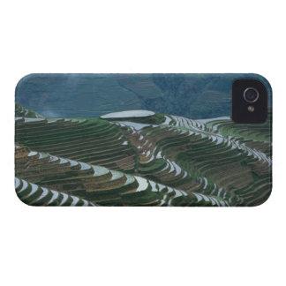 Paisaje de las terrazas en la montaña, 2 del arroz iPhone 4 Case-Mate cárcasa