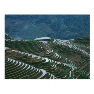Paisaje de las terrazas en la montaña, 2 del arroz postal