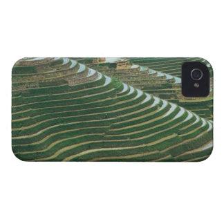 Paisaje de las terrazas en la montaña, 3 del arroz iPhone 4 coberturas