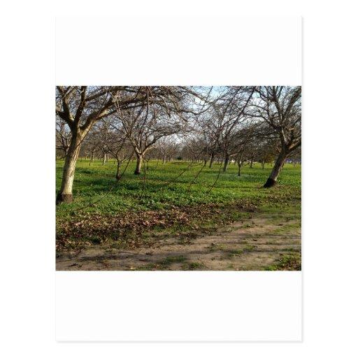 paisaje de los árboles de la huerta tarjeta postal