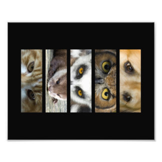 Paisaje de los ojos de los animales impresion fotografica