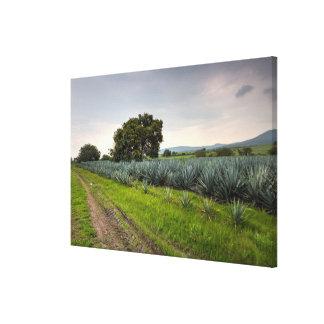 Paisaje del agavo azul impresiones en lona estiradas