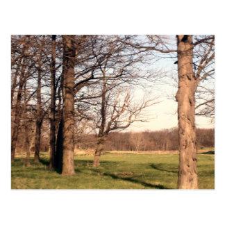Paisaje del árbol tarjetas postales
