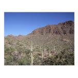 Paisaje del cactus postales