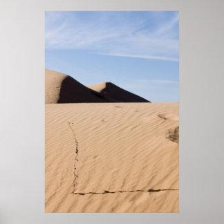 Paisaje del desierto póster