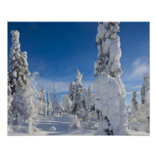 Paisaje del invierno en Lappland Póster