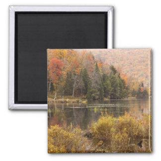 Paisaje del otoño con el lago, Vermont, los E.E.U. Imán Cuadrado