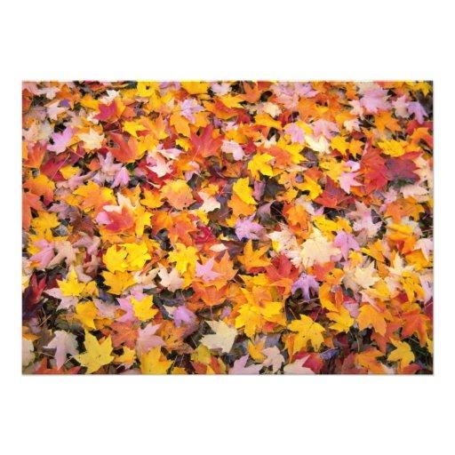 Paisaje del otoño invitacion personal